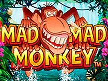 Безумная-Безумная Обезьянка от разработчика Microgaming азартная игра